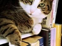cat-718936_1920