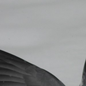 6012.PigeonLanding5