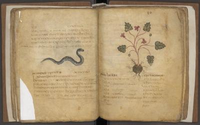 herbariumm