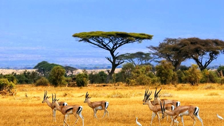 Amazing-pictures-africa-gazelle