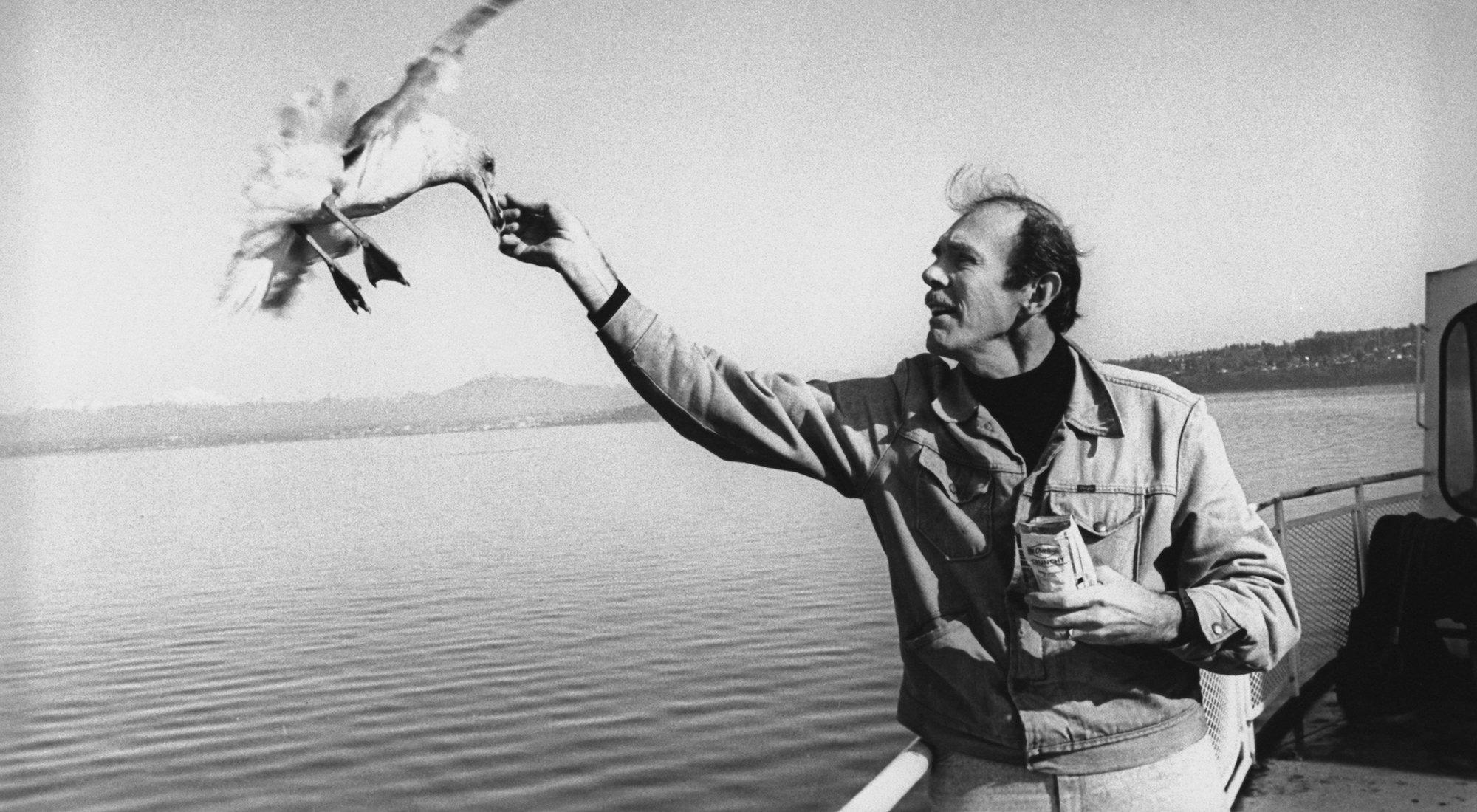 El escritor Richard Bach. 128296: Author/paraglider Richard Bach hand-feeding a seagull on the wing as he stands on deck of the of the Washington State Ferry on the Puget Sound.