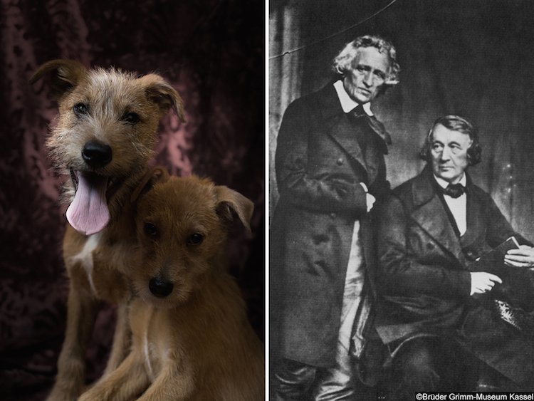 Кучетата Бишкота и Брициола - и братя Грим
