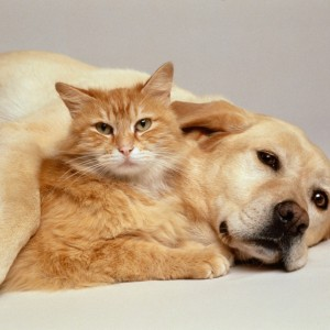 Dogs and Cats - common Problems,pets, Cat, pet, dog,