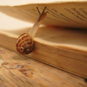 snail-on-book
