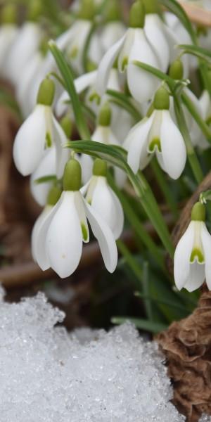 nature-plant-flower-spring-botany-flora-1287412-pxhere.com