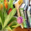 tulips-2214156_1920