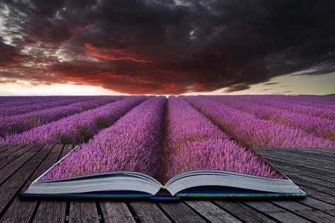 veneratio-creative-concept-pages-of-book-stunning-lavender-field-landscape-summer-sunset-under-moody-red-stor_a-G-12363436-14258384