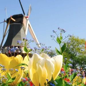 Wietzaden-kopen-in-Nederland