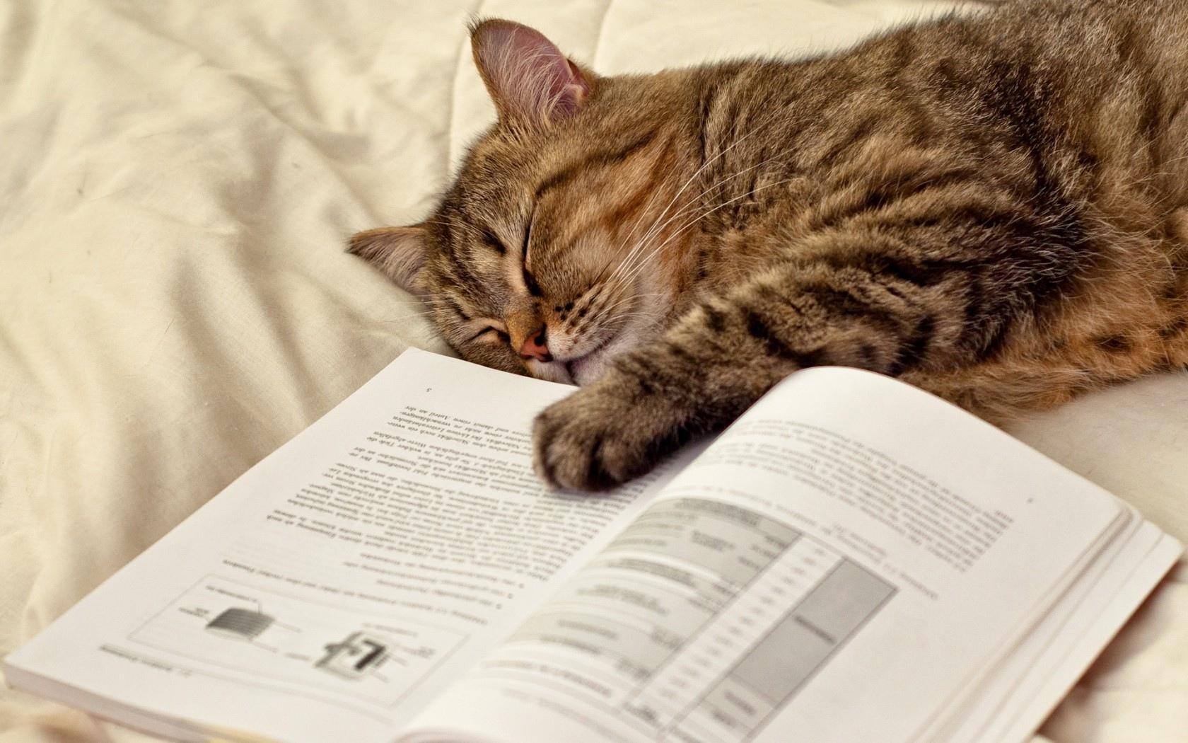 50561-cat-sleeping-lying-paw-humor-books