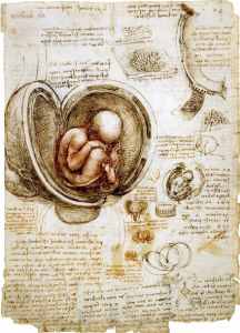 An-early-example-of-exploded-views-by-Leonardo-da-Vinci-also-note-the-smaller