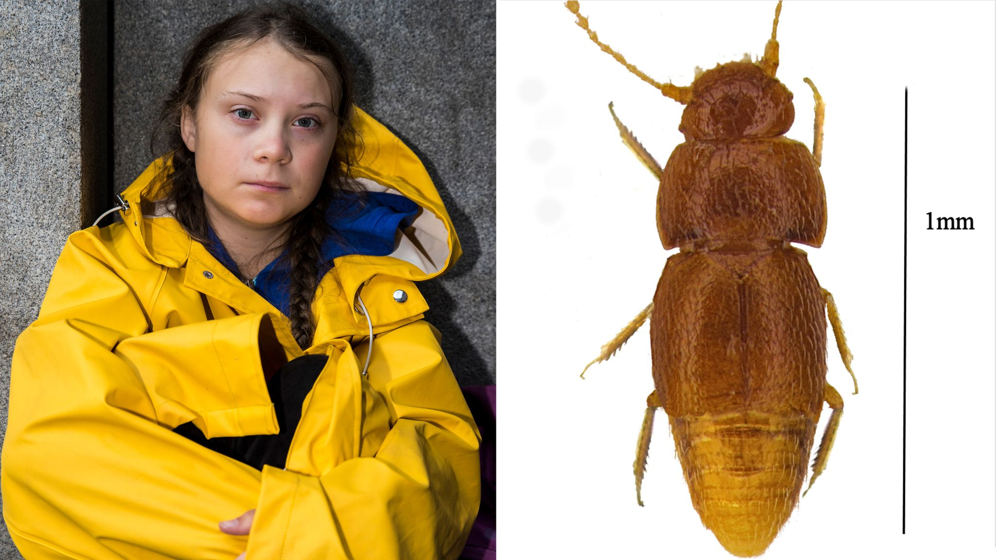 skynews-greta-thunberg-beetle_4815761