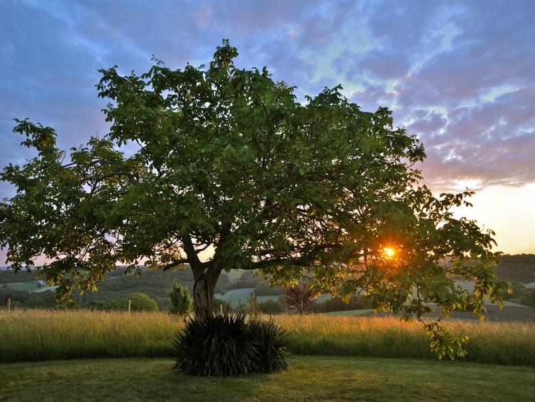 5c159aeea2189-Walnut-tree-Lusignac-2011